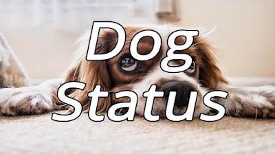 Dog Status
