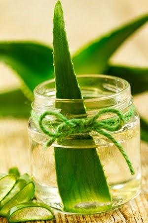 Cómo preparar aceite de sabila casero para el cabello