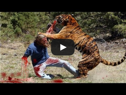 10 Deadly Animal Attacks on Humans - Weird Worm