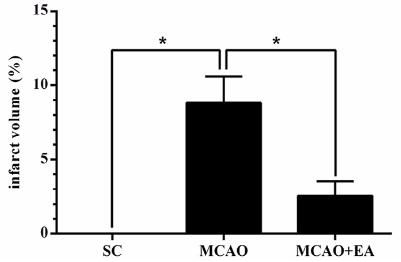 図:鍼刺激による脳梗塞治療効果