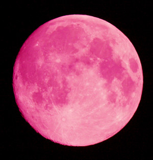 When I Flipped Over The Calendar Page For This Month 6th Listed Pink Moon Color Enthusiast That Am Had To Find Out More