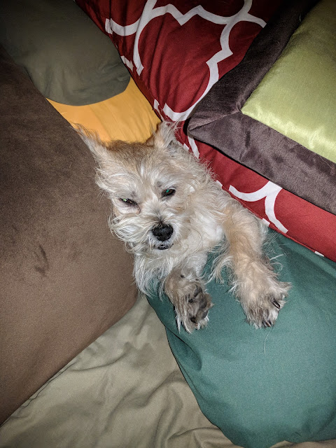 Sallie buried in pillows