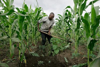 Sokoto govt. gets N4bn loan for farmers 1