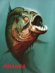 5 Ikan Yang Paling Mematikan