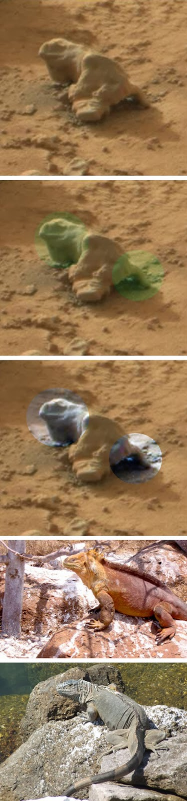 nasa mars lizard - photo #6