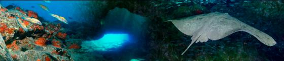 fondos océano canario