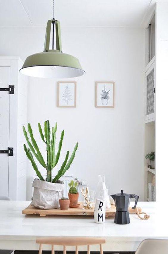 cactus-en-cocina