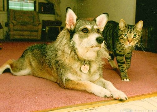 Dog Who Saved Nearly 1,000 Homeless Cats