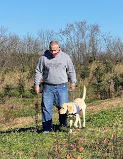 A man in a mask and a gray sweatshirt and a yellow Labrador retriever in a purple service dog harness walk through the grass at a tree farm.