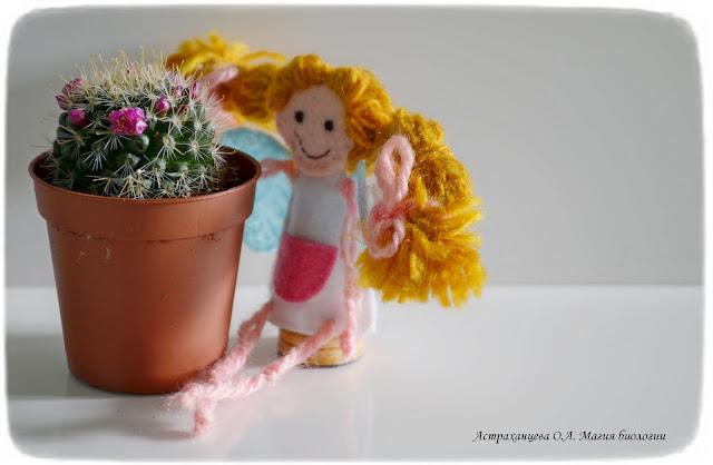 cvetok-kaktusa-palchikovaja-irgrushka-feechka