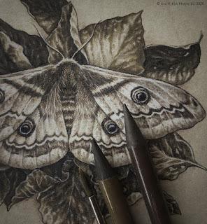Saturnia Pyri Moth by Victoria Francés