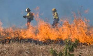 Cỏ cháy-