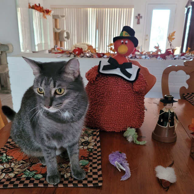 Sawyer, want to come hang out with me and Mr. Turkey?