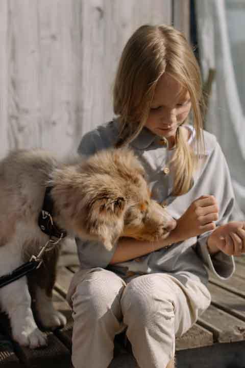 bergers australiens miniatures, berger australien chiot, aussies, race de chien, animaux de compagnie, animaux domestiques, chien de compagnie, chien de chasse, chien de garde, renforcement positif, berger américain, dressage chien, education canine, éducateur canin, dresseur de chien, dresseur canin, chien agressif