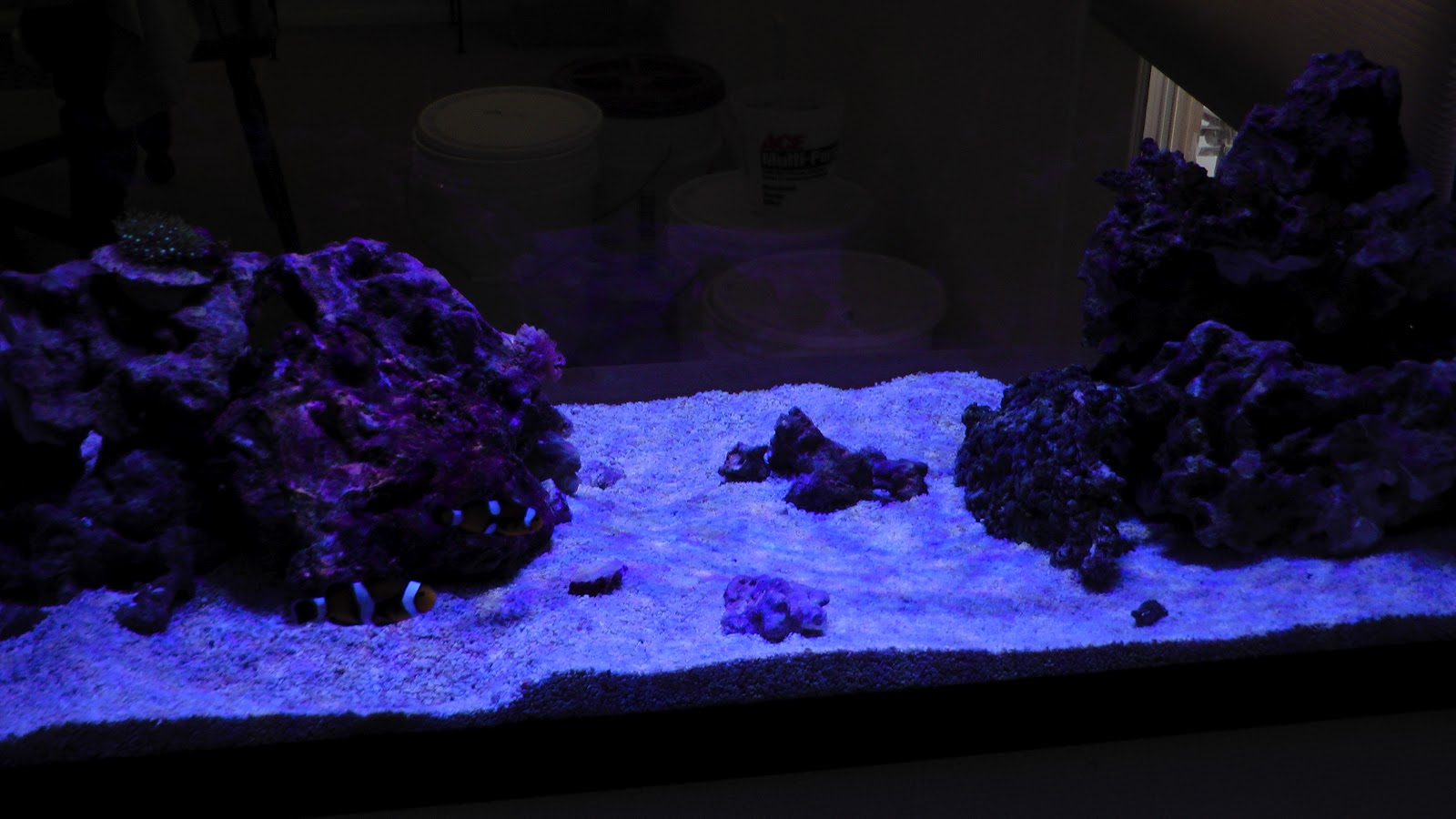 High Nitrates In Reef Tank Steps To Take During High