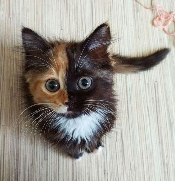 Cute Cat Photos