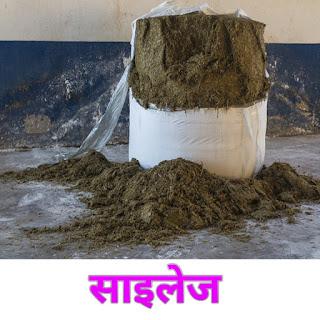 साइलेज ( silage ) क्या है पूरी जानकारी हिन्दी में