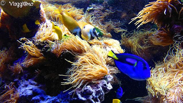 Acquario nel Museo Oceanografico