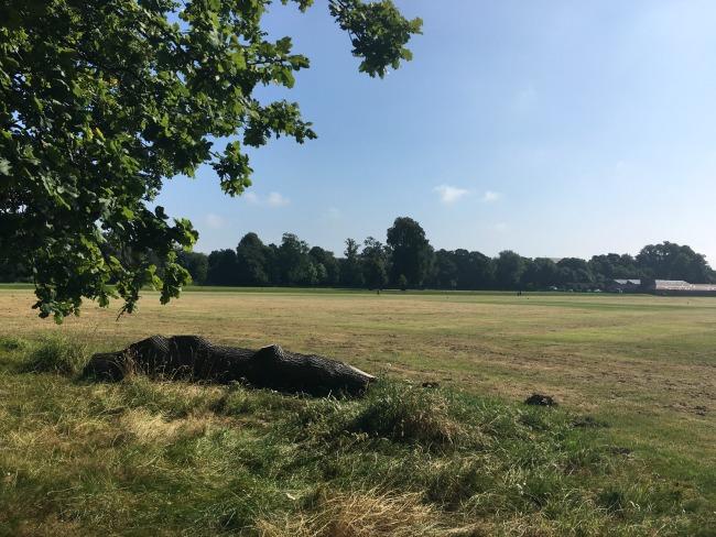 blackweir-fields-log-in-foreground