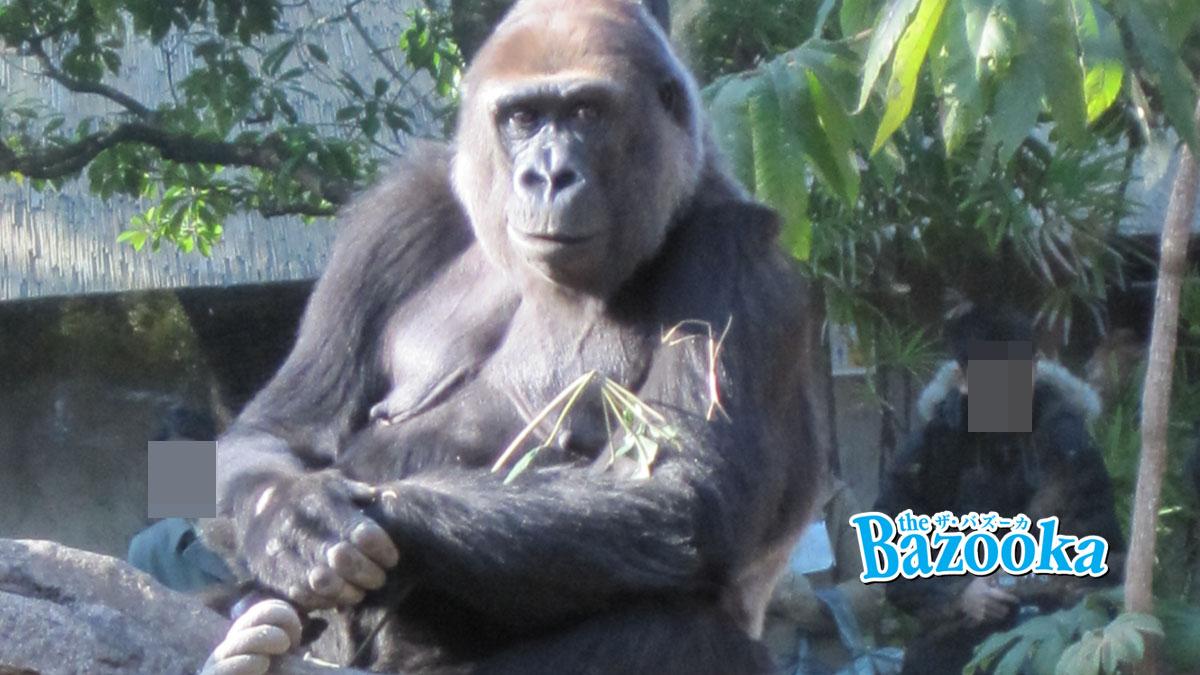 動物園・水族館は本当に必要なのか