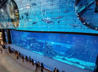 Dubái, Emiratos Árabes Unidos. Centro Comercial Dubai Mall. Dubai Aquarium.