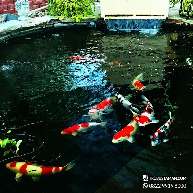 kolam koi jepang