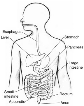 Get well. Live well. Be well.: Digestive Health