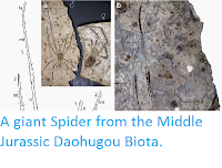 http://sciencythoughts.blogspot.co.uk/2014/05/a-giant-spider-from-middle-jurassic.html