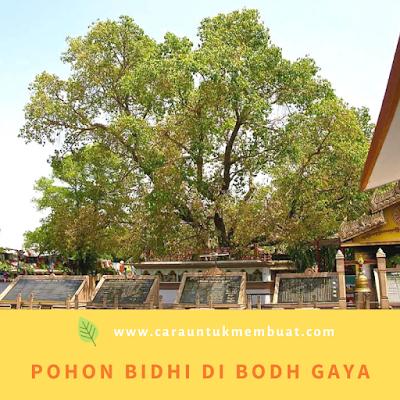 Pohon Bidhi di Bodh Gaya
