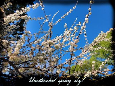 pretty deep blue sky above las cruces new mexico with flowering branch white flowers