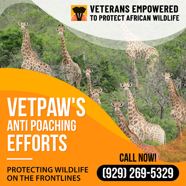 vetpaw reviews