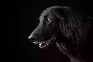 Black dog name