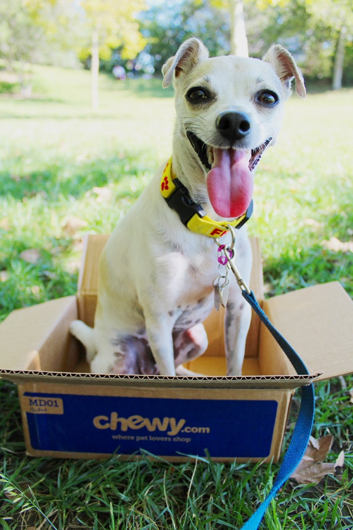 Chewy.com Review