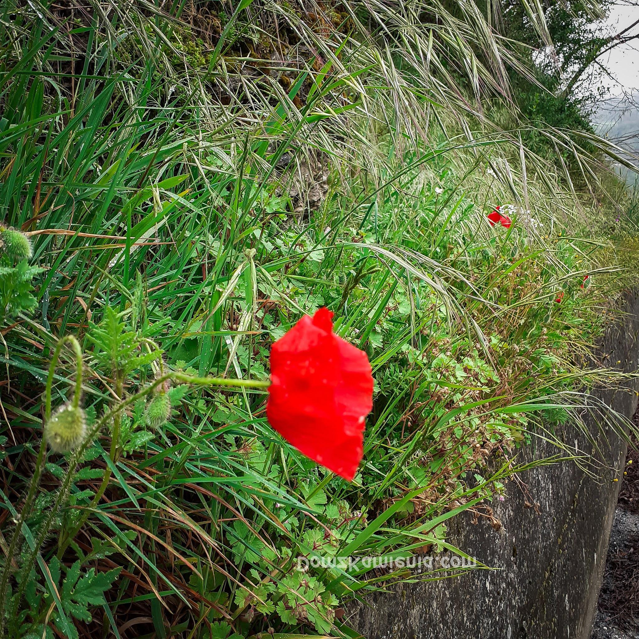 Maki, wiosna w Toskanii, Dom z Kamienia blog