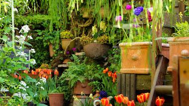 Cultivar bulbos de flor de primavera en maceta: inspiración y éxito