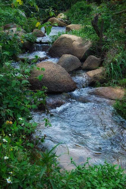 Con suối nhỏ ở Đà Lạt