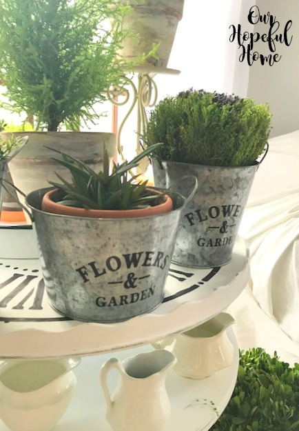 galvanized pail graphics flower and garden potting plant aloe