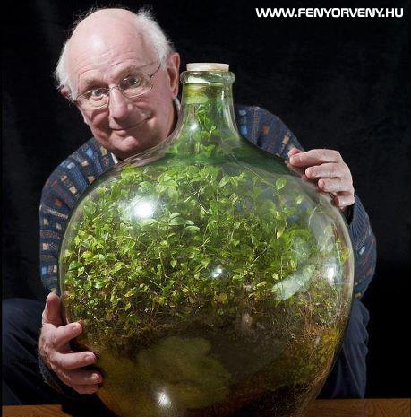 53 éve virul az üvegbe zárt kert