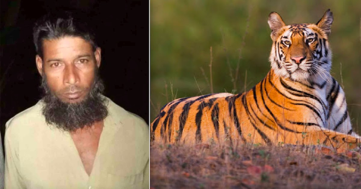 Poacher Thought To Have Killed 70 Rare Bengal Tigers Gets Caught After 20-Year Hunt