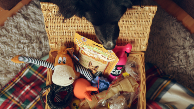 pet-hampers