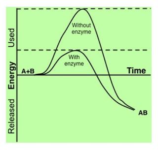 perbandingan energi aktivasi dengan dan tanpa enzim