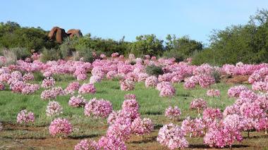 10 sorprendentes paisajes de flores silvestres
