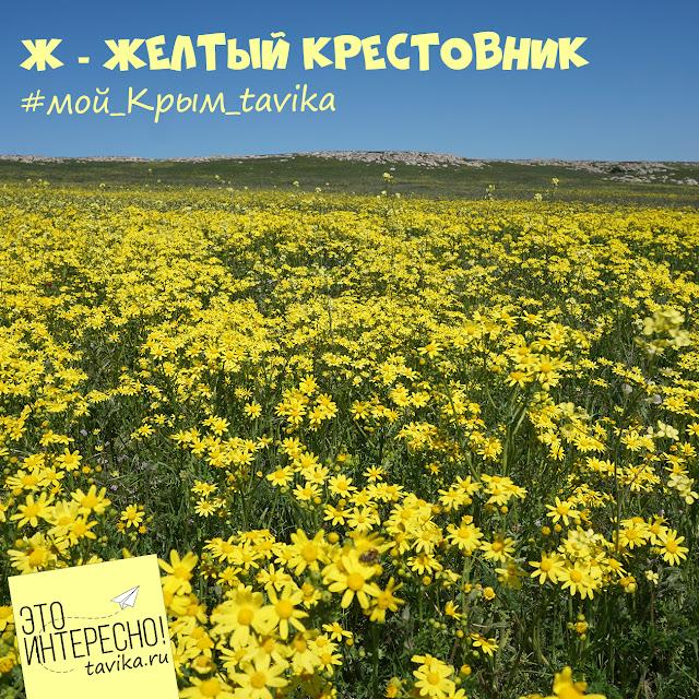 Поле крестовника. Крым, Каралары