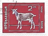 Selo Cabra doméstica