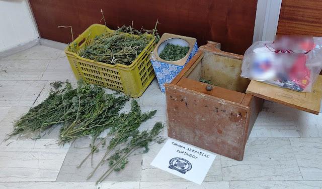 """Η καλλιέργεια """"φούντας"""" πάει συννεφο στην Πελοπόννησο"""
