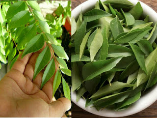 Curry leaves tea can be a boosting factor in your weight loss journey