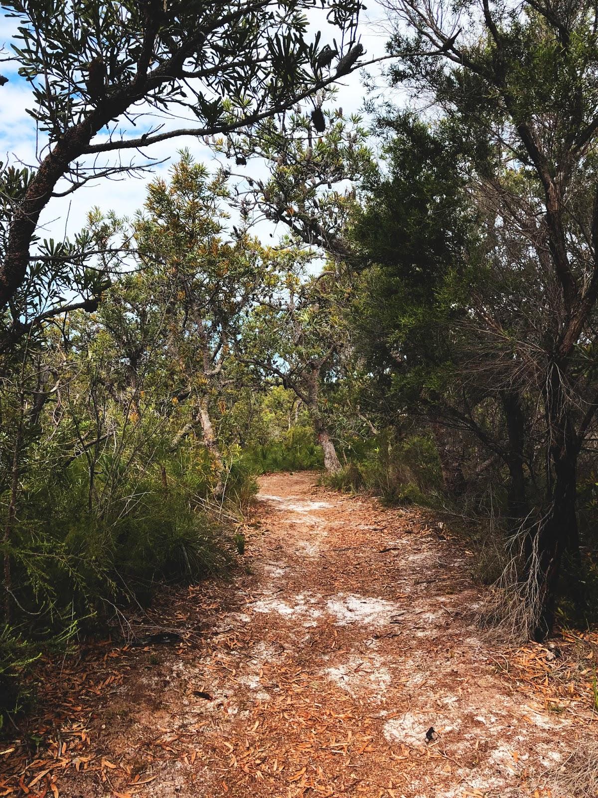Bicenntenial Walk na Bribie Island - świeżka w parku między drzewami
