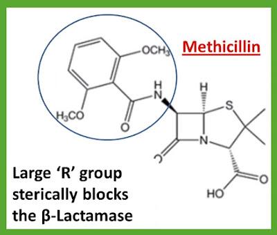 Methicillin
