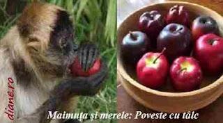 Maimuța și merele: Poveste cu tâlc