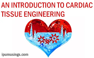 AN INTRODUCTION TO CARDIAC TISSUE ENGINEERING (#biochemistry)(#tissueengineering)(#biotechnology)(#ipumusings)(#heartcelltransplant)